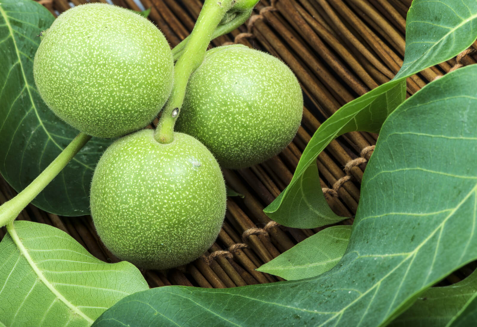 Black Walnut Husks for Yeast Infection