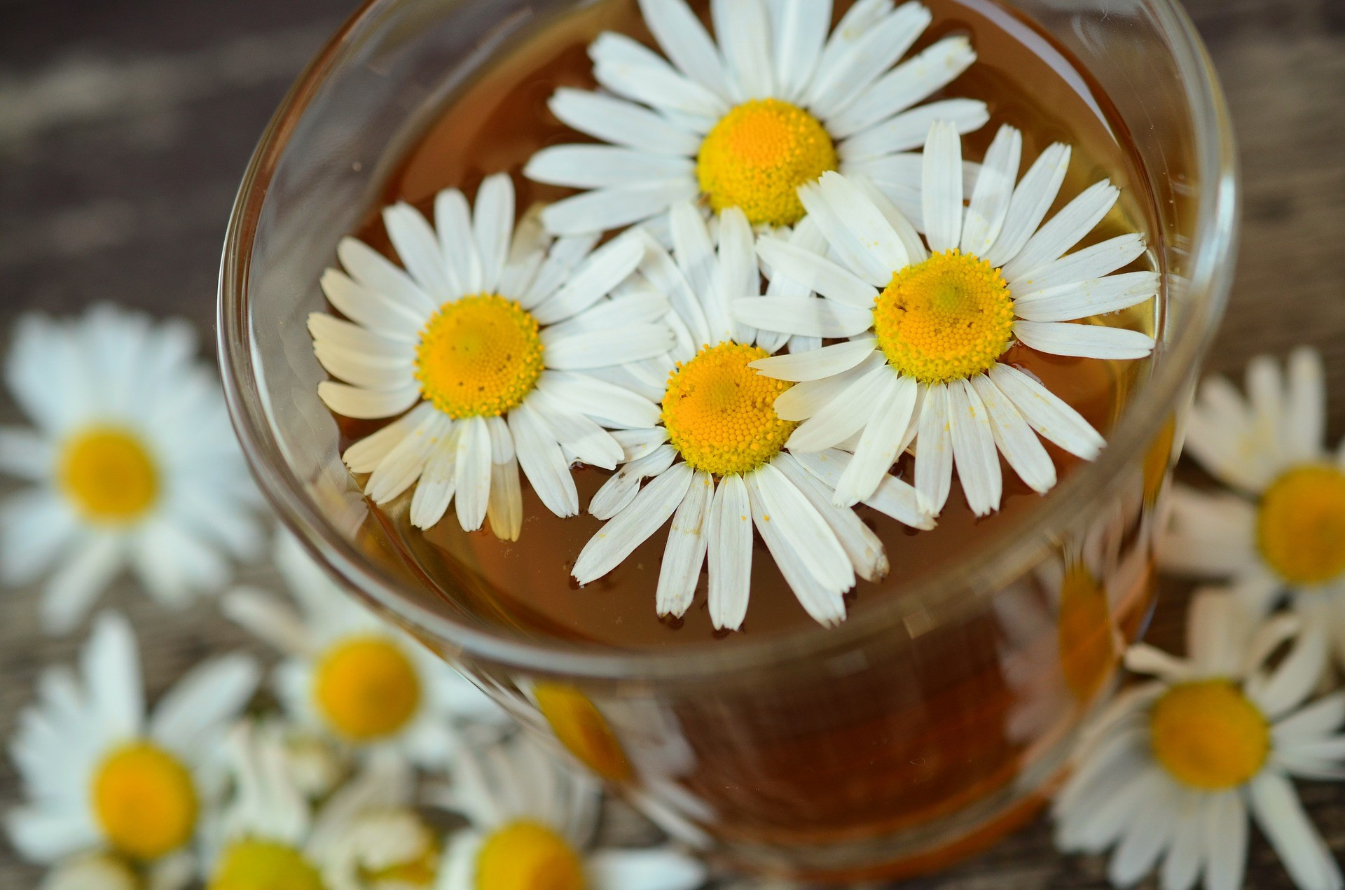 Try chamomile to treat Candida albicans problems.