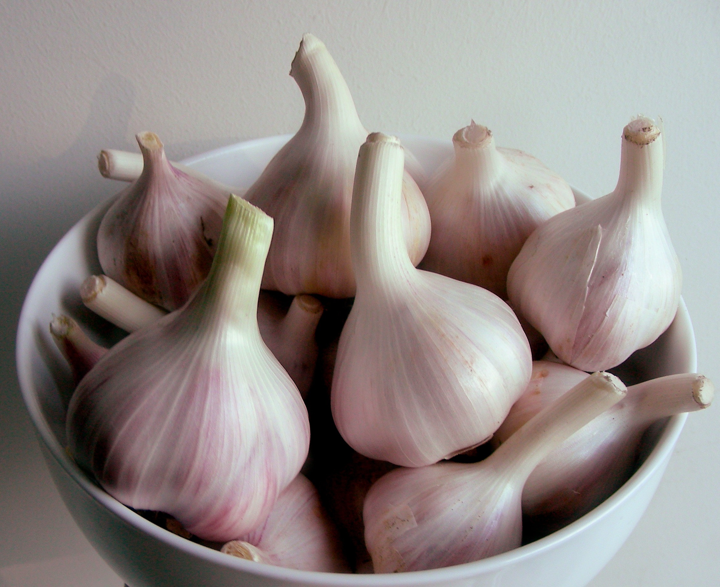 Garlic Bulbs.