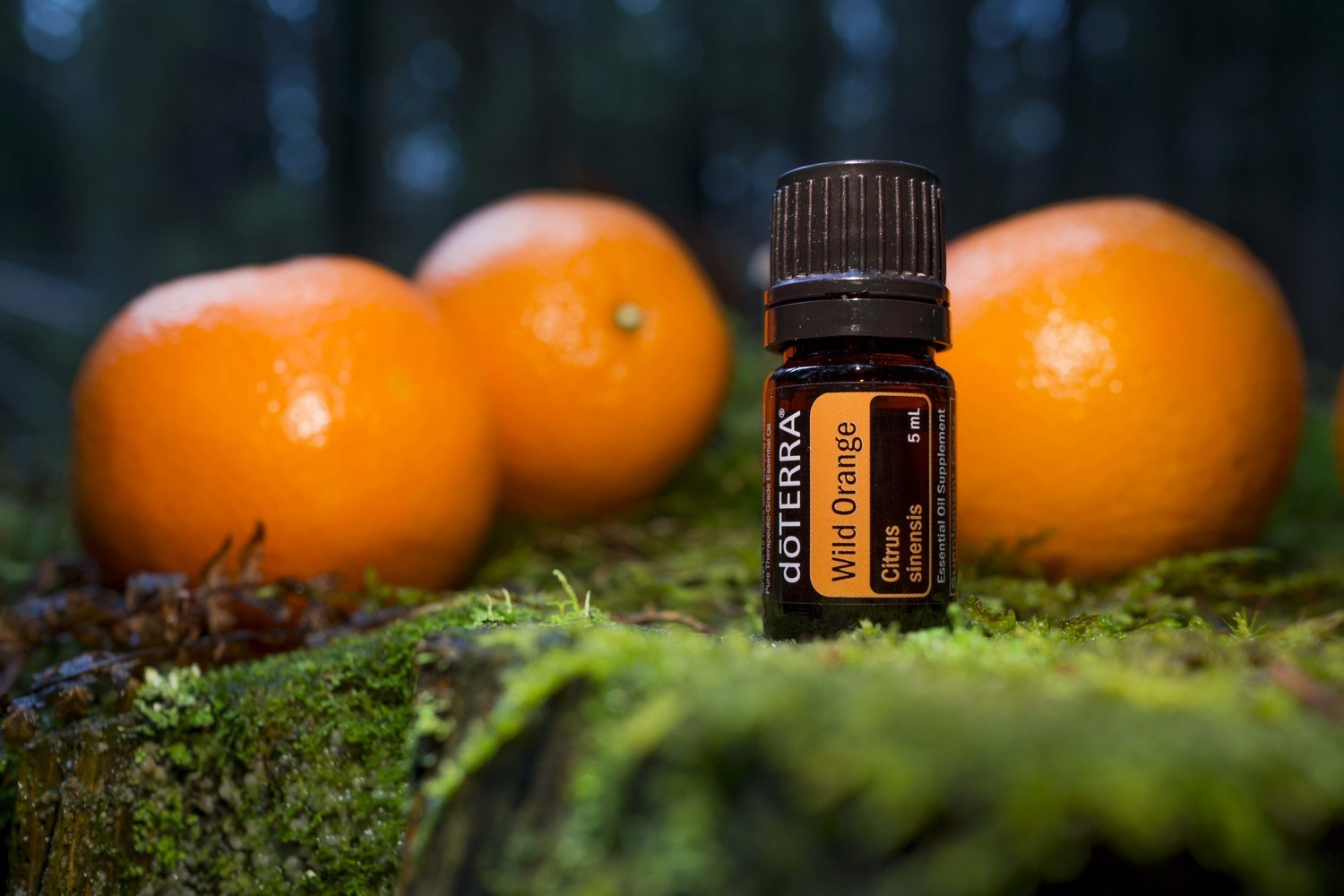 Image result for wild orange essential oil