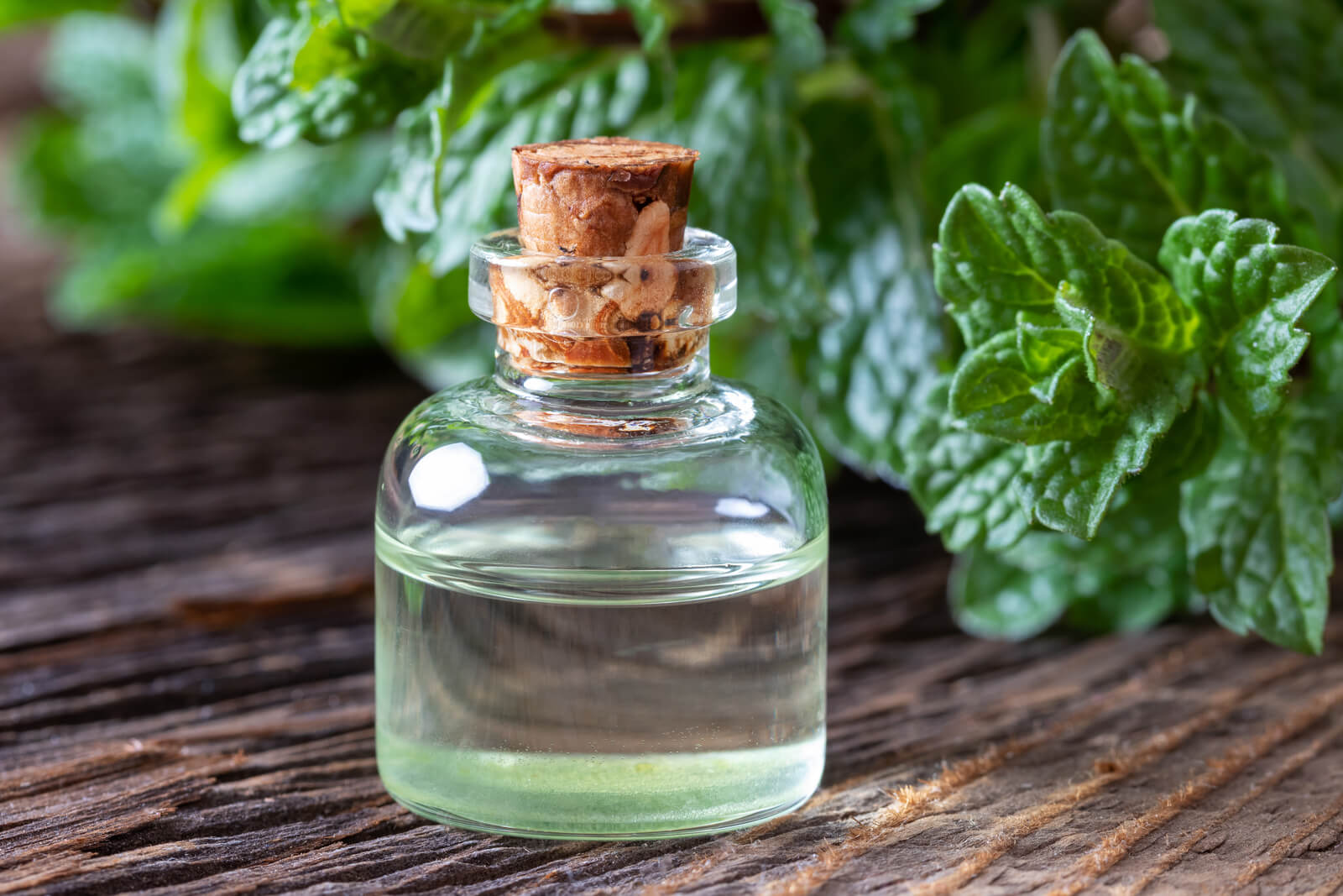 Peppermint oil may differ based on the creation process or the type of plant used. Some peppermint oil has a different chemical composition, and may be less effective at treating Candida infections as a result.